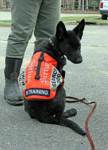 training my puppy