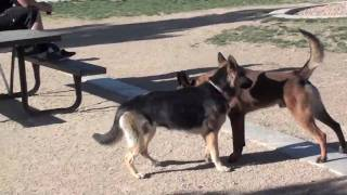 Remote Electronic Dog Training - How will dog perform without collar on?