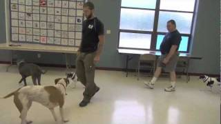 True Dog Aggression Rehabilitation - dog training