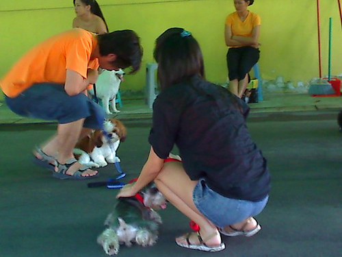 obedience training classes