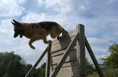 best dog training