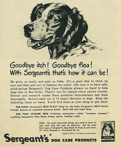 dog pet care