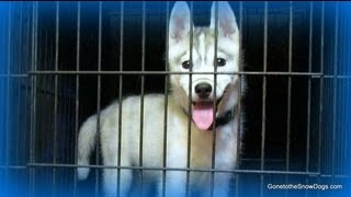 How to Crate Train your Puppy The First Step in Potty Training