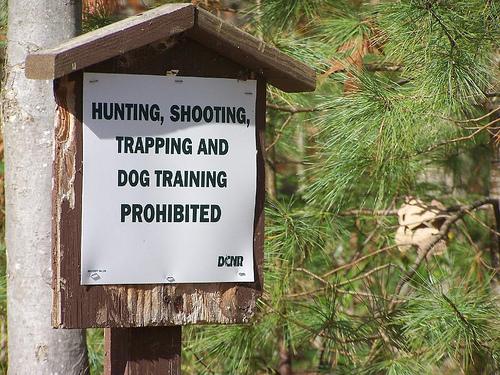 hunting dog training