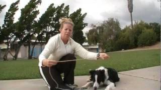 Off Leash dog Training -