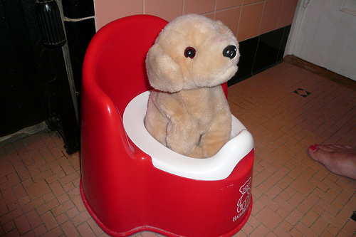 potty training puppies