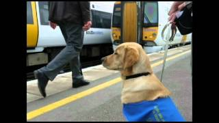 Hester A Guide Dog Puppy's Tale