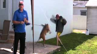 Teaching your dog to bite (Protection Training 101) by the Miami Dog Whisperer