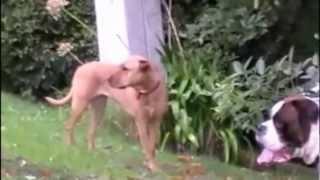 Calming Signals - Dog Training Denver CO