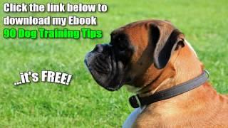 Free Boxer Dog Training Tips - Training Your Boxer With My Free Boxer Dog Training Tips
