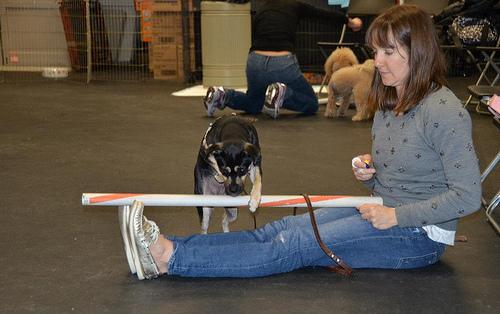 dog training tricks