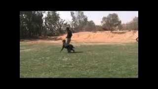 Jerry - Companion Dog Training - Eastwind Academy
