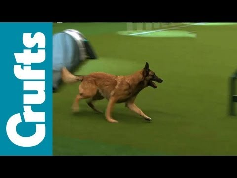 Agility – Singles Final – Small, Medium and Large – Crufts 2012