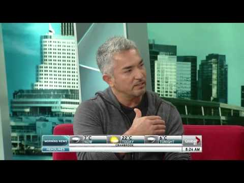 Cesar Millan's tips for difficult pets