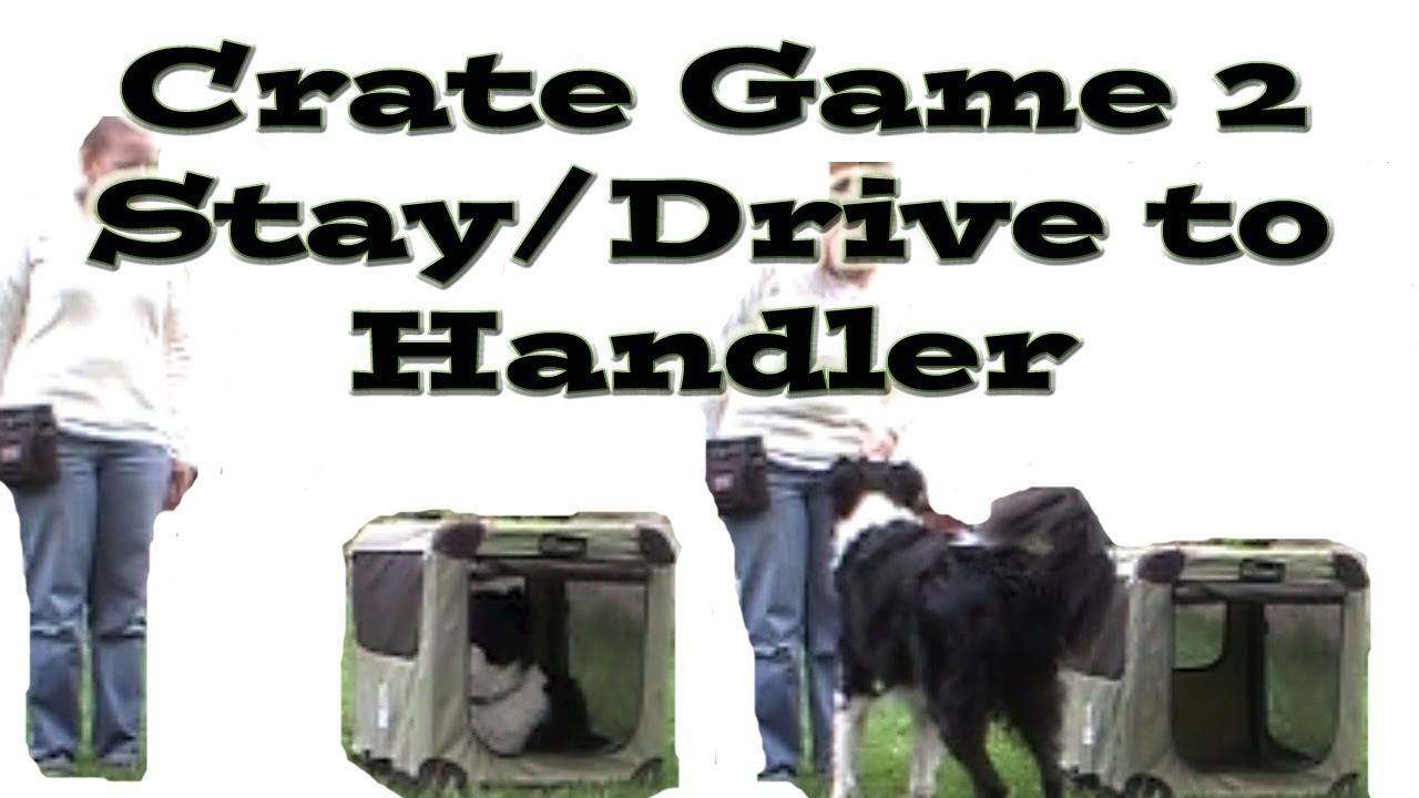 Crate Games 2: Stay/Drive to Handler – Dog Training