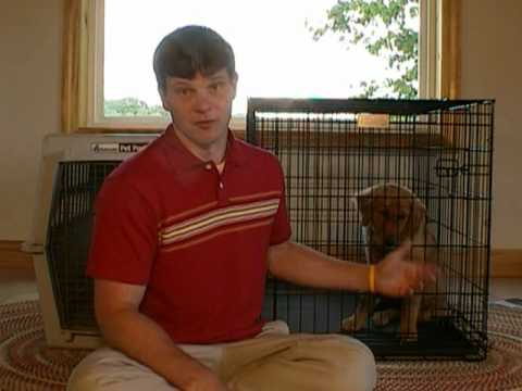 Crate or Kennel Training a Puppy
