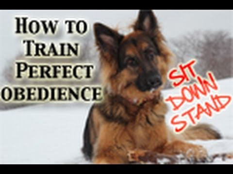 How To Teach Any Dog PERFECT Obedience! (Sit,Down,Stand)