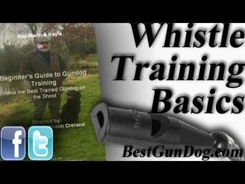 Hunting Dog Training (Whistle Training Basics)