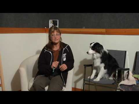 Labrador Retriever Training and Care