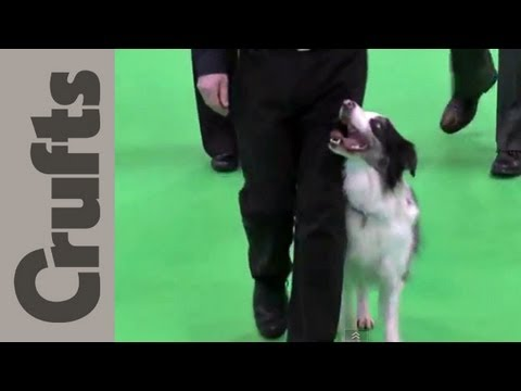 Obedience Championship Dogs Part 1 – Crufts 2012