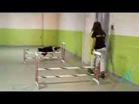 Pet Care – Dog Hotels