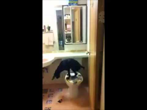 Toilet trained dog – AMAZING