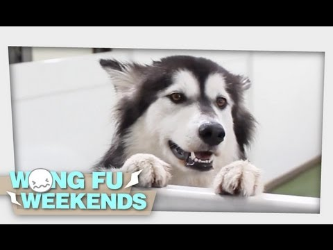 WFW 103 – Doggie Daycare