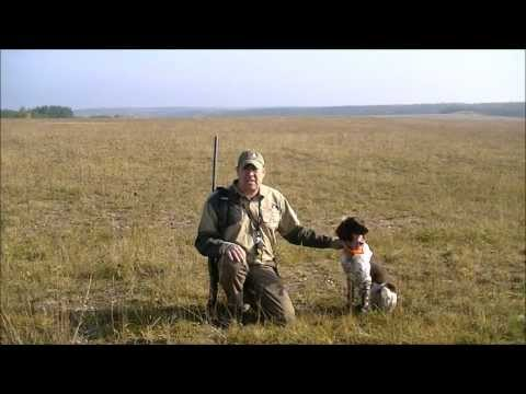WILD Jaeger Hunting Dog Training