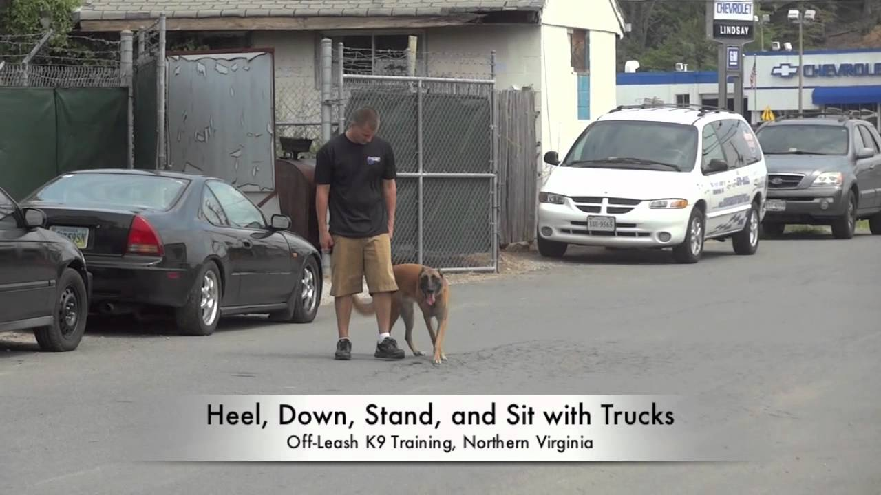 Advanced Training with Off-Leash K9 Training! E-collar Training, Northern Virginia