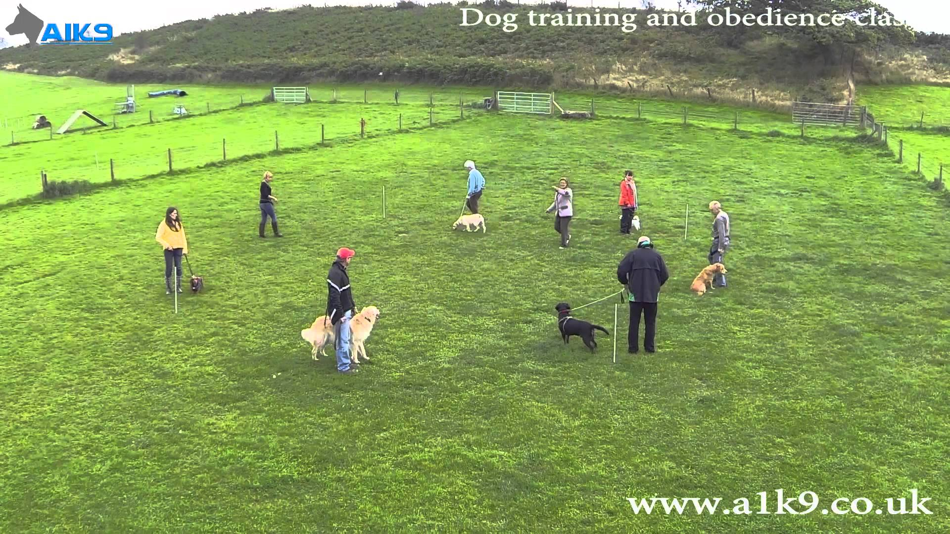 Group Dog Training Classes at A1K9 – The Professional Dog Trainers